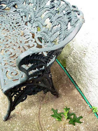 Victorian Cast Iron Fern Bench: SOLD