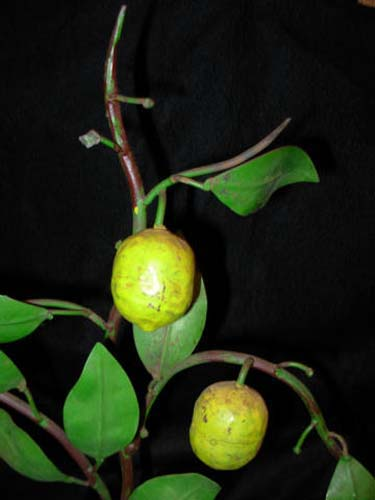 Vintage Tole: Lemon  Tree Candlestick