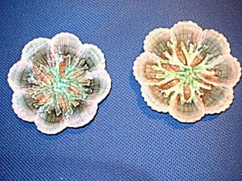 Majolica: American Shell & Seaweed